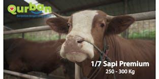 Qurban Sapi Premium 1/7 (250-300 Kg)